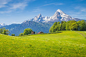 Idyllic landscape in the Alps with fresh green meadows and blooming flowers and snow-capped mountain tops in the background.