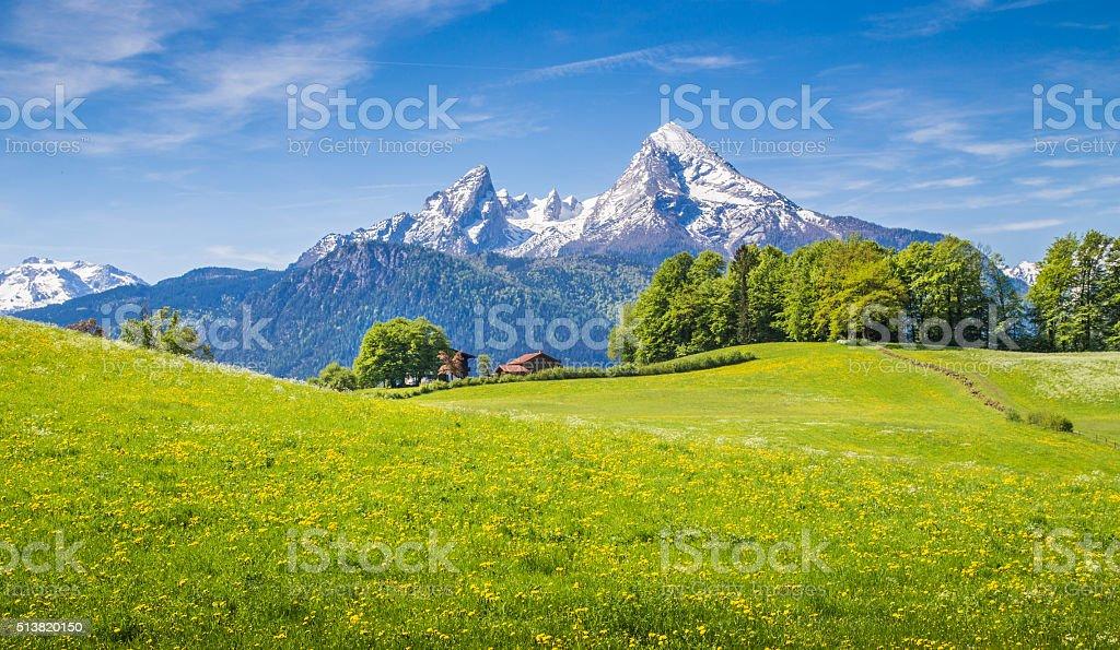 Idyllische Landschaft der Alpen mit grünen Wiesen und Blumen Lizenzfreies stock-foto