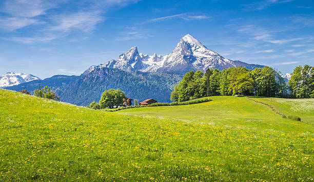 idyllic landscape in the alps with green meadows and flowers - 奧地利 個照片及圖片檔