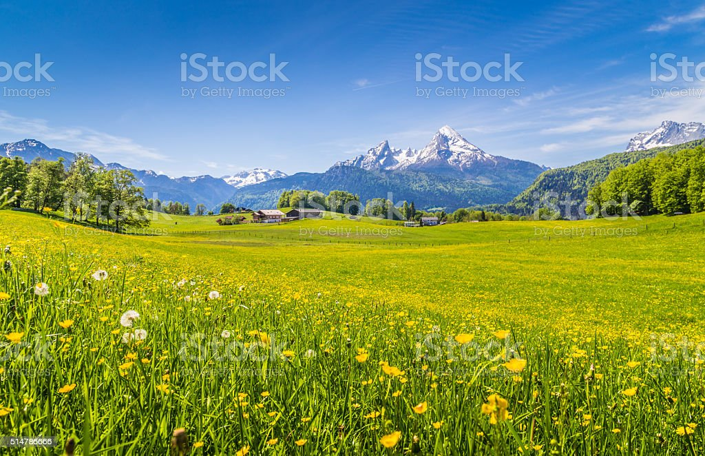 Idyllic landscape in the Alps with green meadows and flowers stock photo