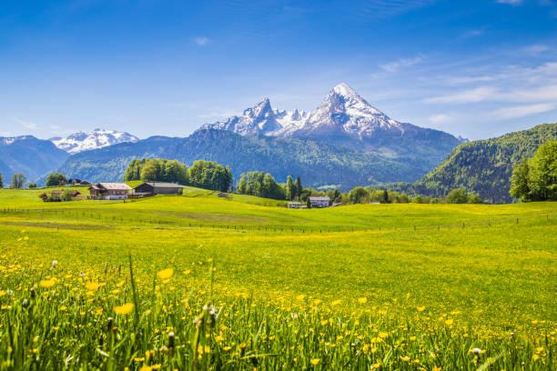 idylliska landskapet i alperna med gröna ängar och blommor - bayerischer wald bildbanksfoton och bilder