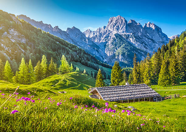 Idyllic landscape in the Alps with mountain chalet in springtime Idyllic landscape in the Alps with traditional mountain chalet and fresh green mountain pastures with blooming flowers at sunset, Nationalpark Berchtesgadener Land, Bavaria, Germany. bavarian alps stock pictures, royalty-free photos & images