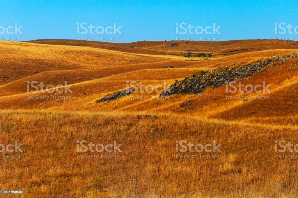 Idyllic landscape, pampa meadows in the hills at gold colored sunrise, Southern Brazil stock photo