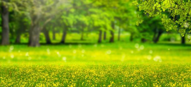 idyllische landschaft panorama backgrond - wäldchen stock-fotos und bilder