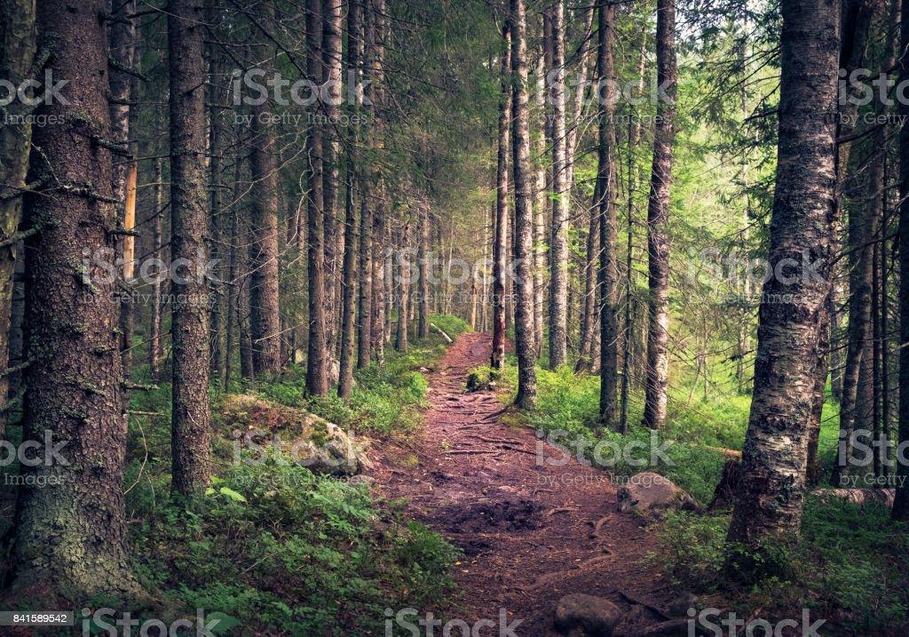 Idílica paisagem com caminho e floresta primitiva na manhã de verão em Koli, Finlândia - foto de acervo