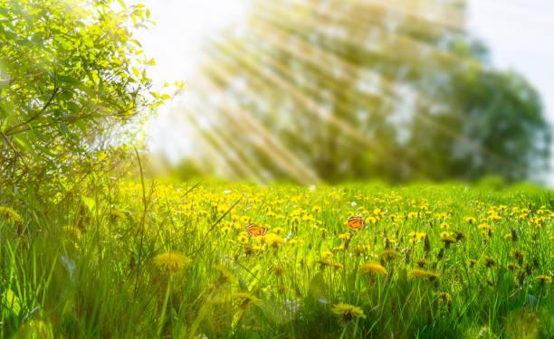 Idyllic meadow in sunshine picture id1126932022?b=1&k=6&m=1126932022&s=612x612&w=0&h=qmtmxwcvvbwiuk2absj6xueswknwjnfo4bgvmngonko=