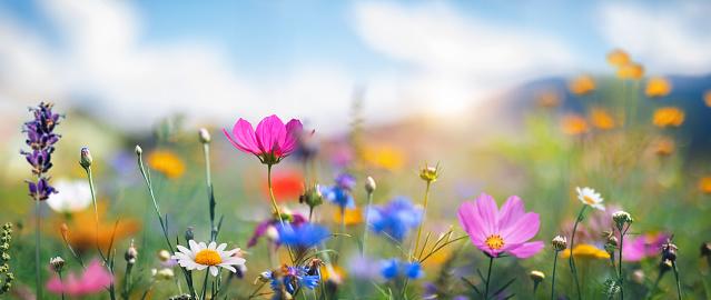 Idyllic summer meadow on a beautiful sunny day.