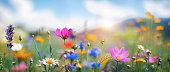 istock Idyllic Meadow 1294119130