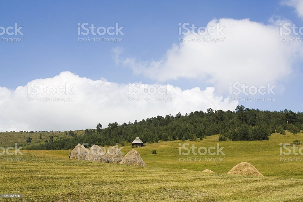 Idyllic meadow - Royalty-free Agricultural Field Stock Photo