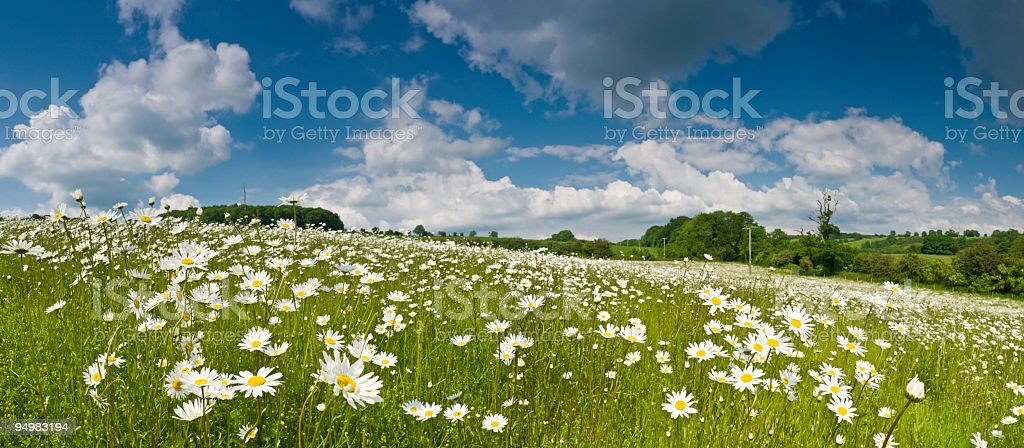 Idyllic meadow under summer skies royalty-free stock photo