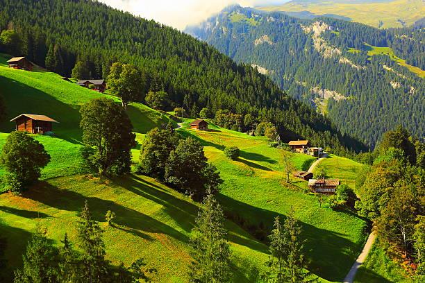 idyllic meadows, grindelwald chalets, pine trees: swiss alps sunrise - traumscheune stock-fotos und bilder