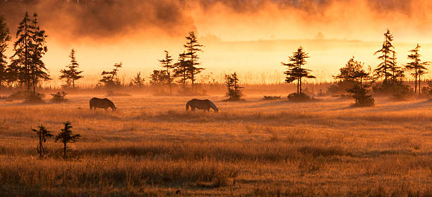 idyllic Misty Morning with horeses on a meadow, bavaria, germany stock photo