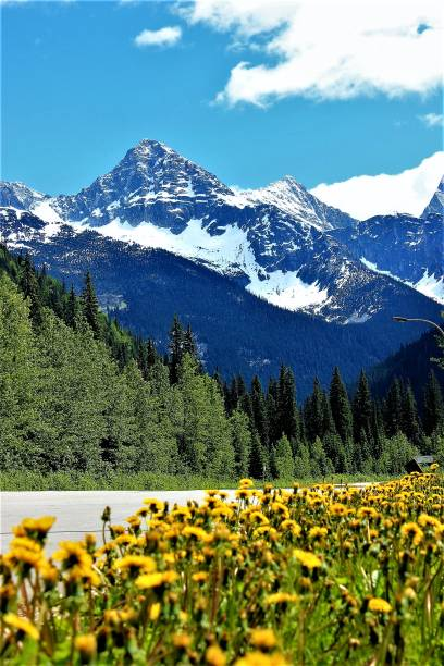 idyllic mountain landscape in the rockies - british columbia glacier national park stock pictures, royalty-free photos & images