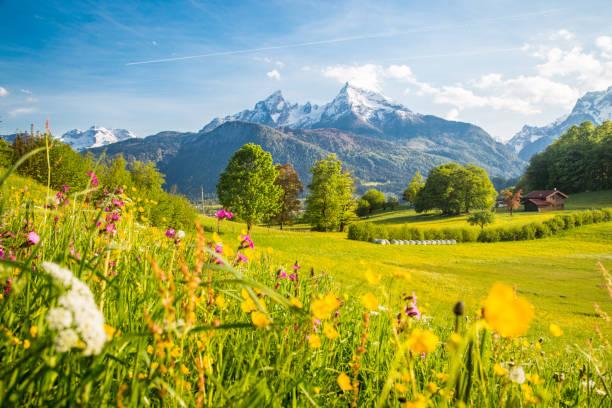 Idyllische Bergkulisse in den Alpen mit blühenden Wiesen im Frühling – Foto