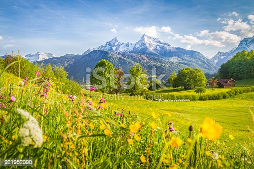 istock Idyllic mountain scenery in the Alps with blooming meadows in springtime 921952090