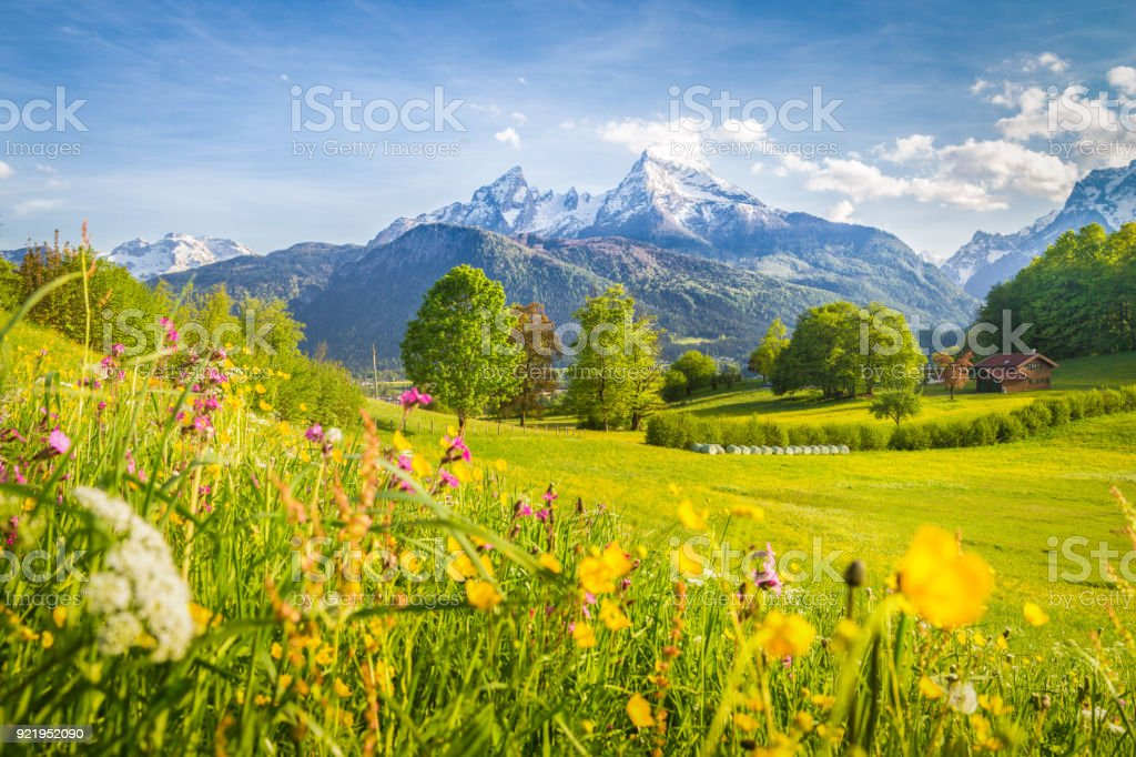 Idyllic mountain scenery in the Alps with blooming meadows in springtime stock photo