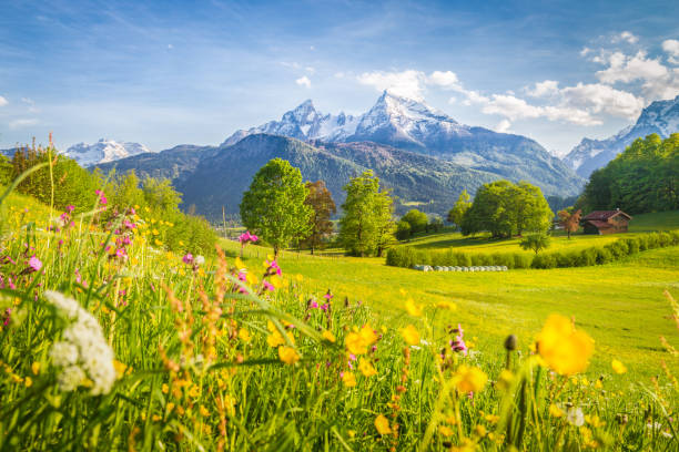 idyllic mountain scenery in the alps with blooming meadows in springtime - meadow stock pictures, royalty-free photos & images