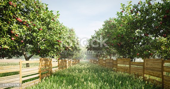 Digitally generated idyllic orchard scene with apple trees, wild grass and long wooden fence. There are also many other fruit trees in this scene/area.  The scene was rendered with photorealistic shaders and lighting in Autodesk® 3ds Max 2019 with V-Ray 3.7 with some post-production added.