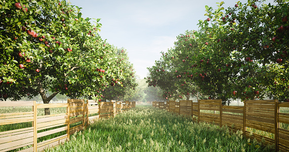 Digitally generated idyllic orchard scene with apple trees, wild grass and long wooden fence. There are also many other fruit trees in this scene/area.\n\nThe scene was rendered with photorealistic shaders and lighting in Autodesk® 3ds Max 2019 with V-Ray 3.7 with some post-production added.