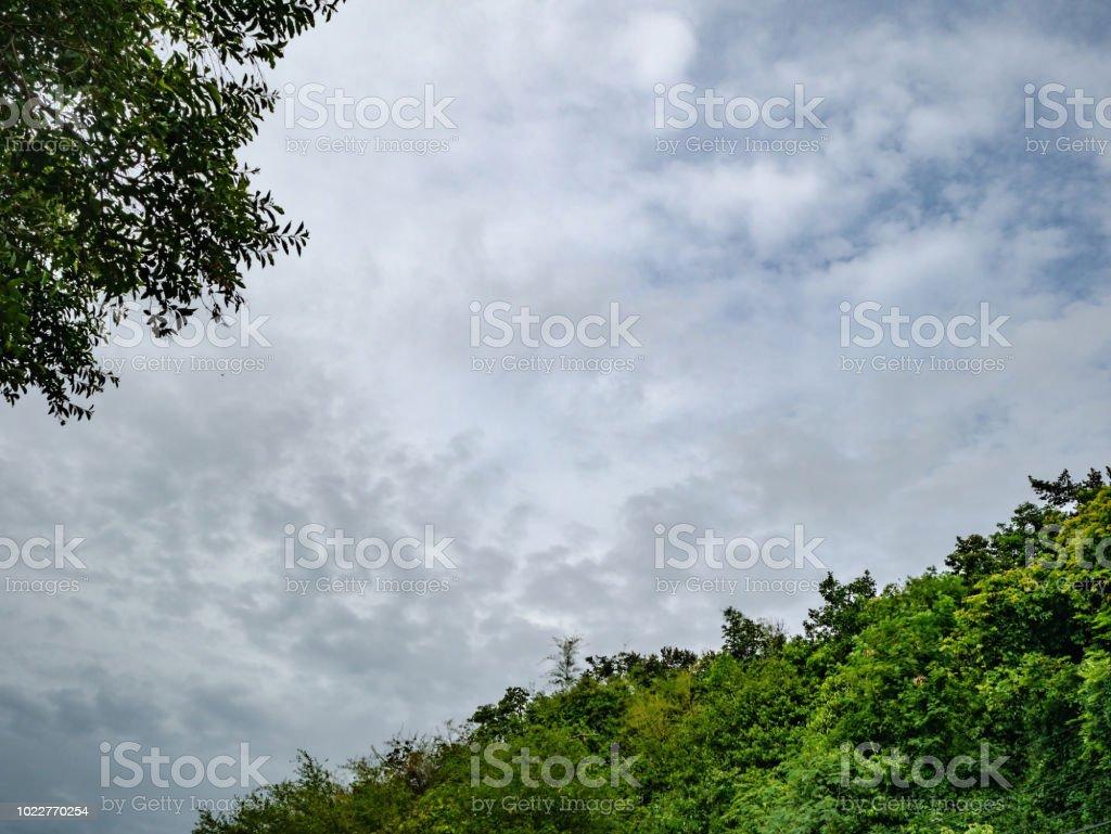 Idyllic rainy sky with tree,cloudscpae