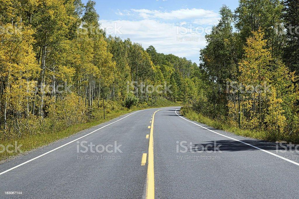 Idyllische Straße durch den wunderschönen Forest Lizenzfreies stock-foto