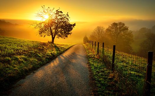 Idyllic rural landscape in golden light