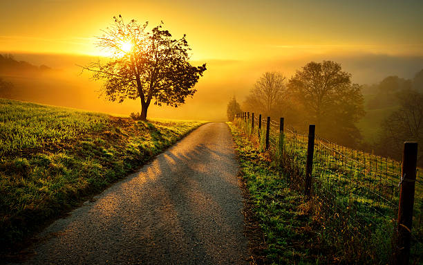 idyllic rural landscape in golden light - trees stock photos and pictures