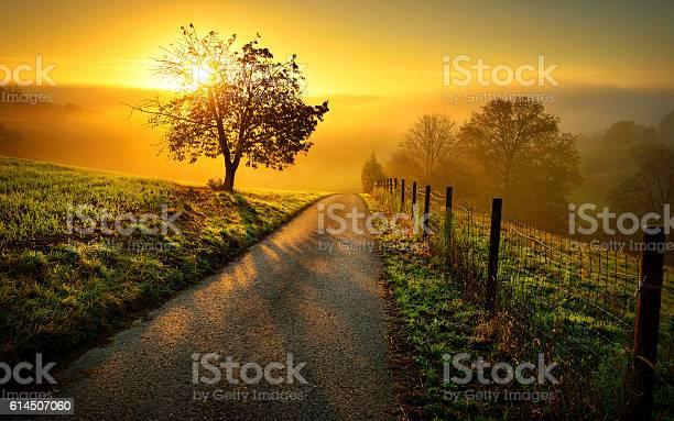 Photo of Idyllic rural landscape in golden light