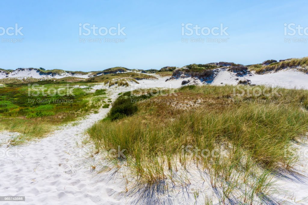 Idyllic sand dunes in Bornholm, Denmark on a day in summer - Royalty-free Backgrounds Stock Photo