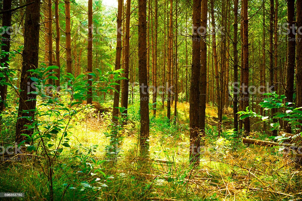 Idyllic scene in the forest royalty-free stock photo