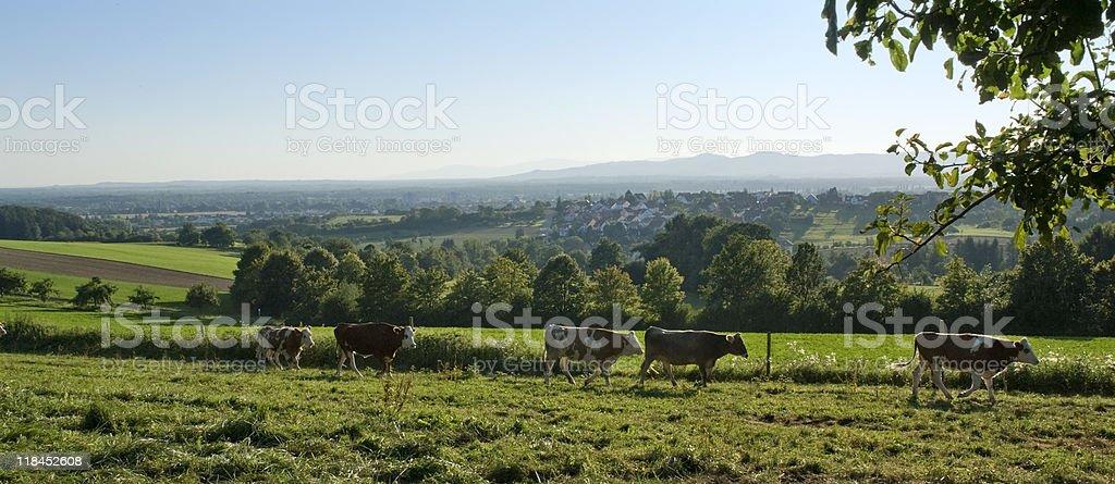 idyllic scenery around Emmendingen royalty-free stock photo