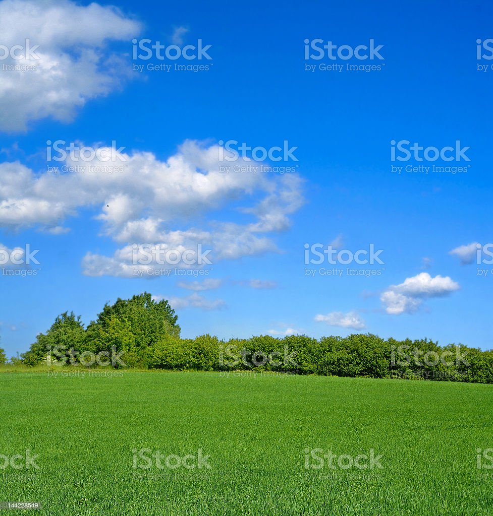 idyllic summer landscape stock photo