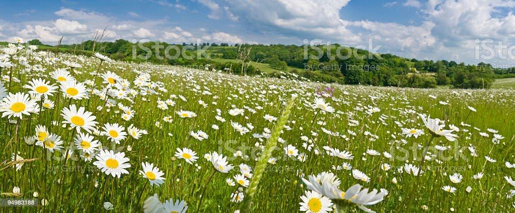Idyllic summer meadow panorama stock photo