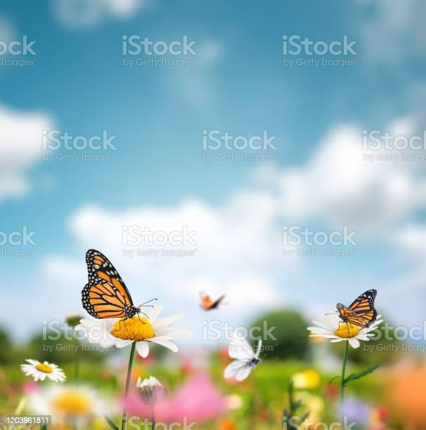 Idyllic summer meadow picture id1203961811?b=1&k=6&m=1203961811&s=612x612&h=wkgoq9 sir2czsu7amzmjcncxpd25la1zmjtmob6qlq=