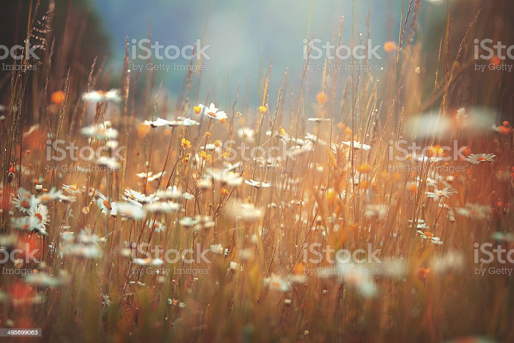 Idyllic summer meadow stock photo
