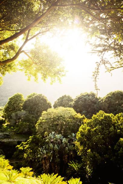 idílica floresta iluminada pelo sol ao amanhecer - jardim do eden - fotografias e filmes do acervo