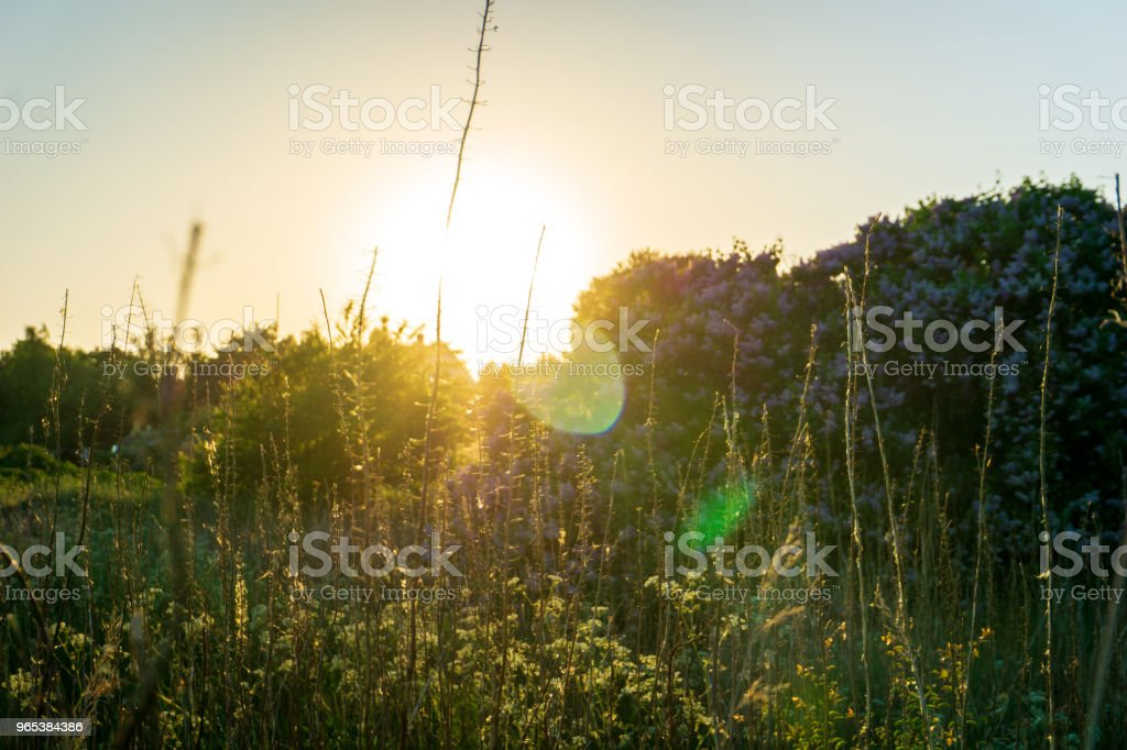 Idyllic sunset in Bornholm, Denmark on a day in summer royalty-free stock photo