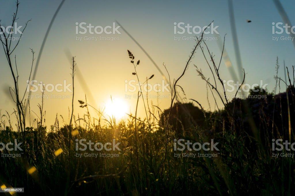 Idyllic sunset in Bornholm, Denmark on a day in summer zbiór zdjęć royalty-free