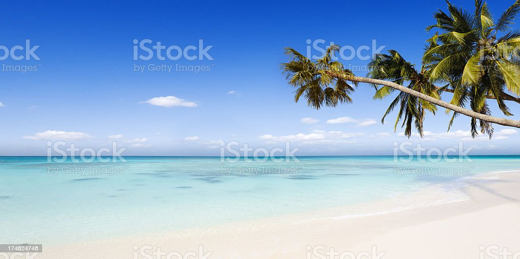 Idyllic Tropical Beach Paradise and Palm Trees stock photo