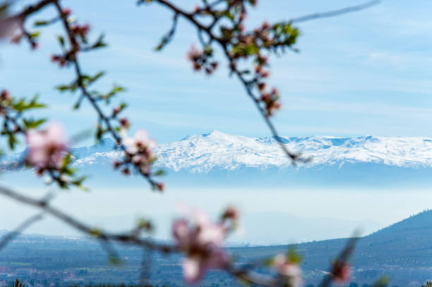 Idyllic view of Sierra Nevada during springtime, Andalusia, Spain stock photo