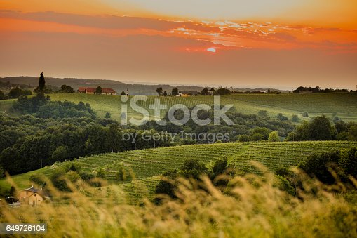 Idyllic view of vinery against sky. Beautiful green landscape during sunset. Scenic view of plants and trees are growing in farm.