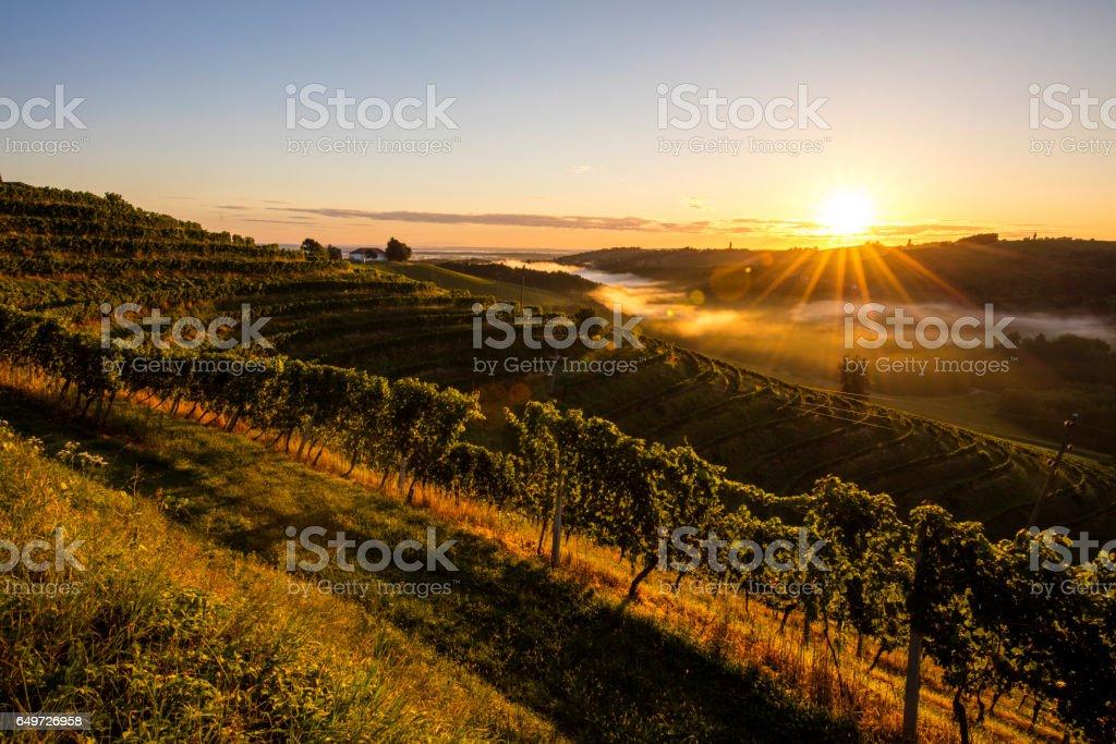 Idyllic view of vineyard terraces against sky stock photo