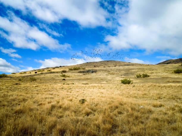 Idyllic view of wild goose, New Zealand - Stock Image stock photo