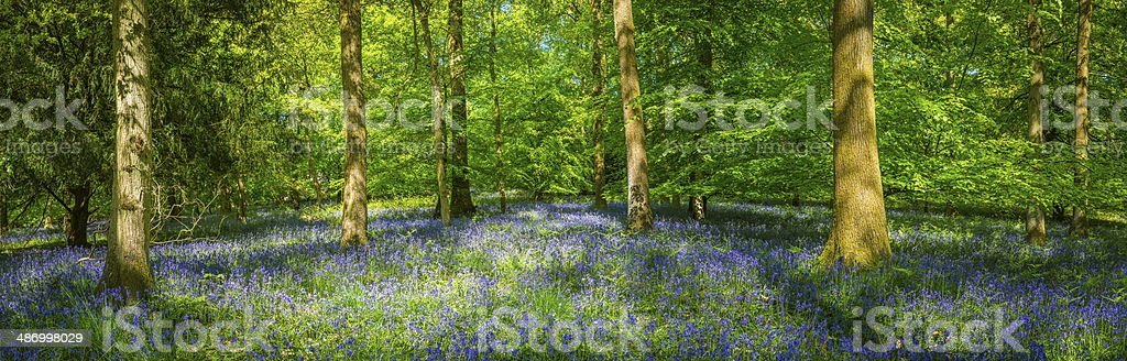 Idyllic wildflower woods vibrant green forest foliage summer background panorama stock photo