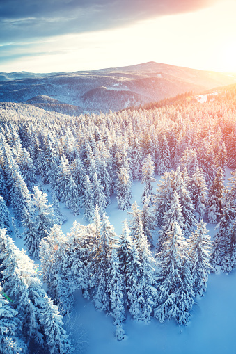 Aerial view on pine trees and mountain landscape at sunrise.
