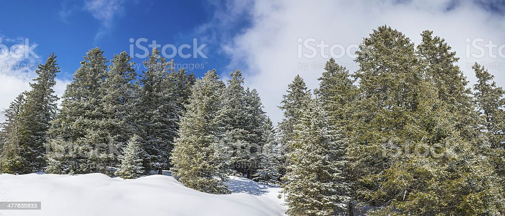 Idyllic winter wonderland frosted fir forest snowy mountains panorama royalty-free stock photo