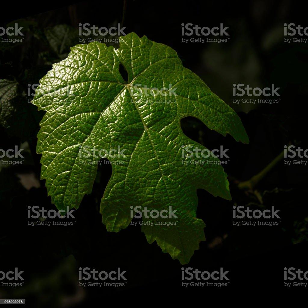çiçek - Royalty-free Color Image Stock Photo