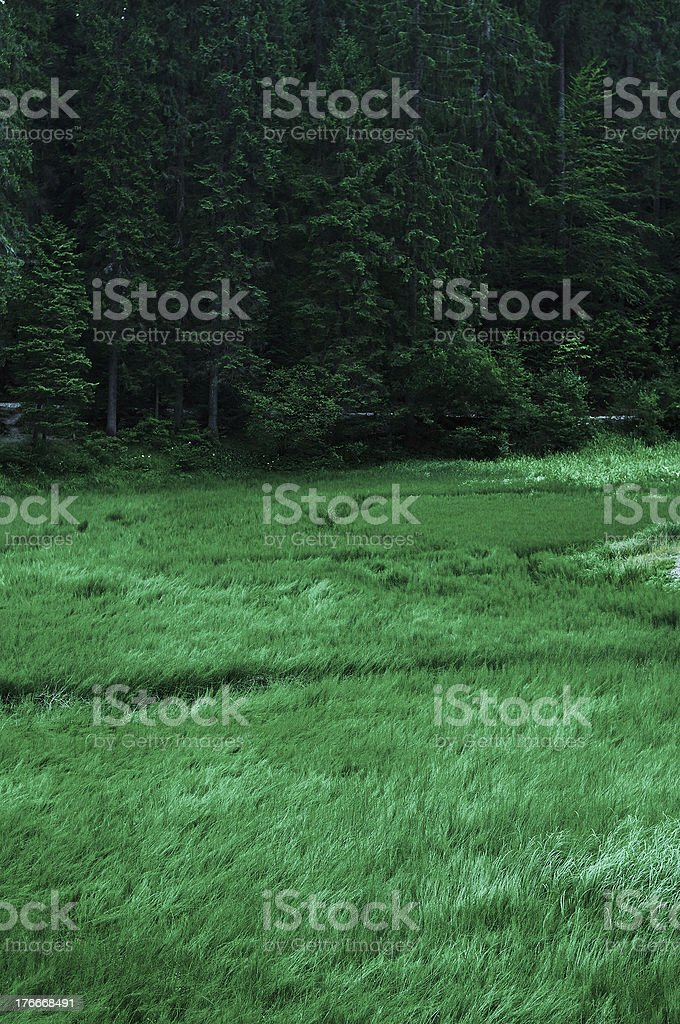 Аield with grass near a forest royalty-free stock photo
