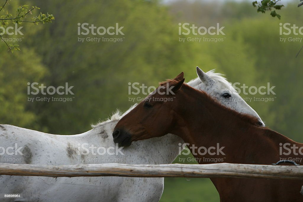 If You Scratch Mine... royalty-free stock photo