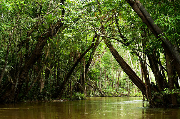 Igarapé in the Brazilian Amazon Igarapé (small river, creek) runs inside the flooded forest amazon region stock pictures, royalty-free photos & images